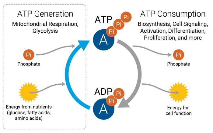 ATP Agilent figure 1