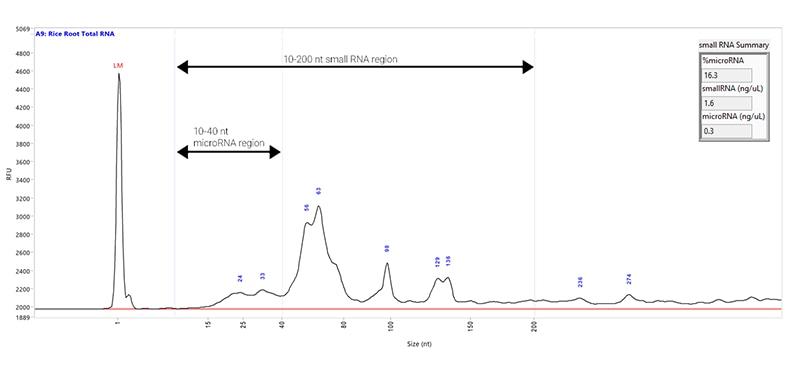 Small RNA Sample on the Fragment Analyzer