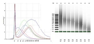 FFPE gDNA samples of varying integrity separated on a TapeStation system using the Genomic DNA ScreenTape assay