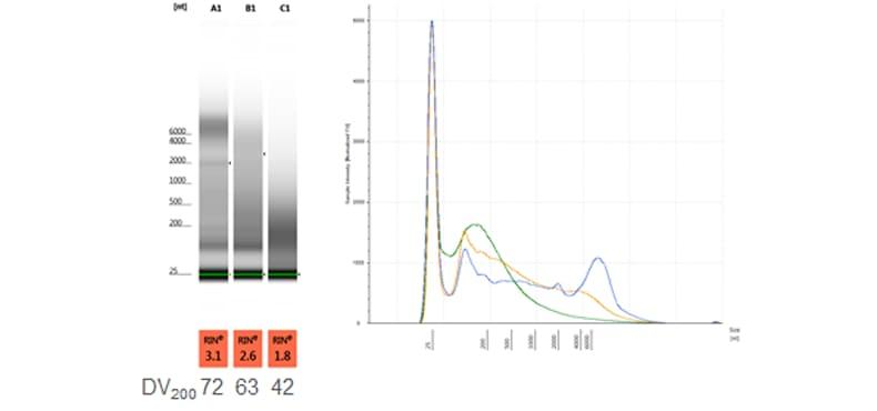 FFPE RNA sample on the TapeStation