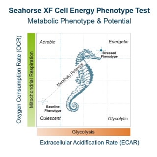 Seahorse XF Cell Energy Phenotype Test Kit