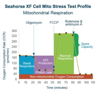 Seahorse XFp Cell Mito Stress Test Kit