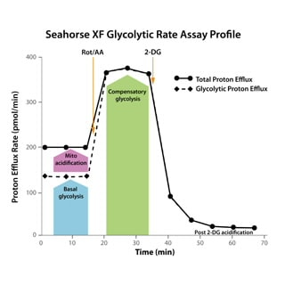 Seahorse XF Glycolytic Rate Assay Kit