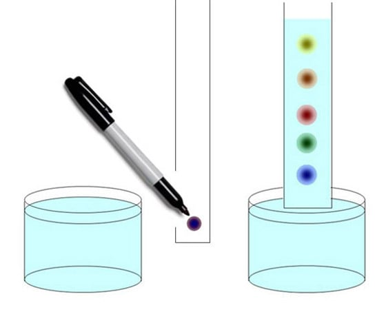 paper chromatography experiment Abstract: briefly summarizes a series of paper chromatography experiments that demonstrate basic physical and inorganic principles, as well as providing an.
